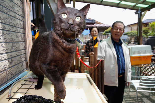 Photo: The Asahi Shimbun via Getty Images